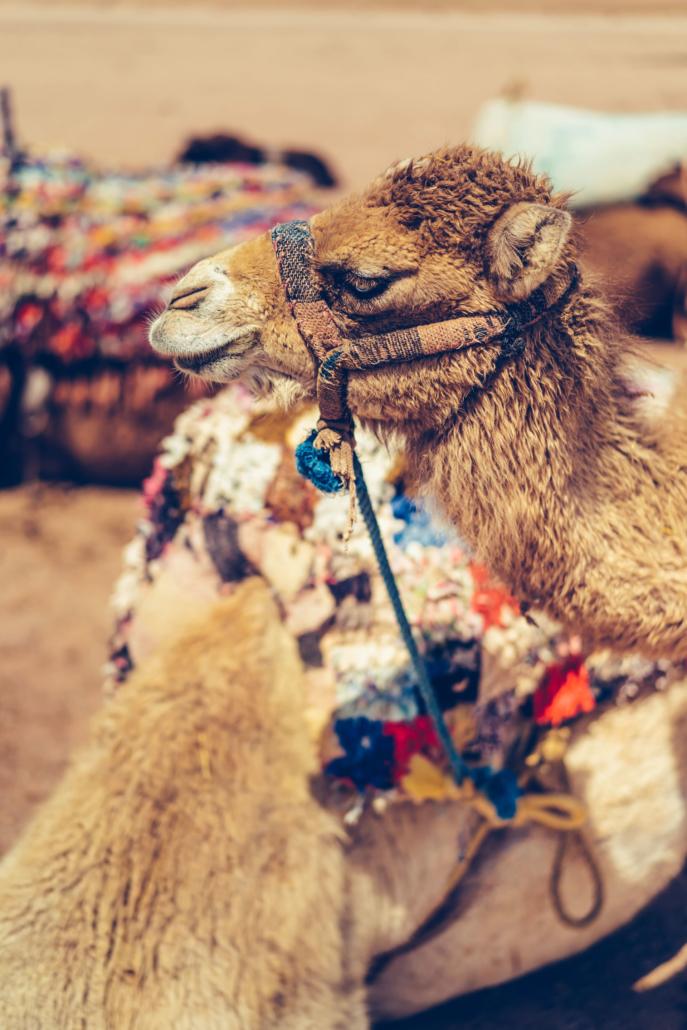 - 19 :: A tea in the desert: birthday in Marrakech :: Luxury wedding photography - 18 ::  - 19